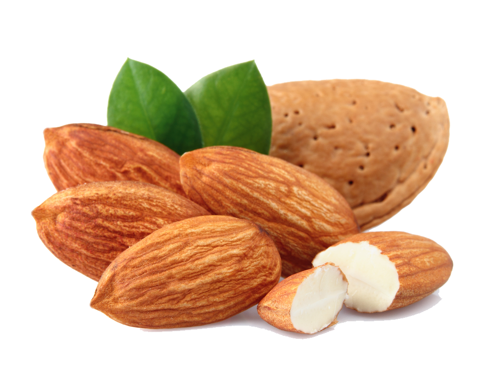 Almond-Free-Download-PNG