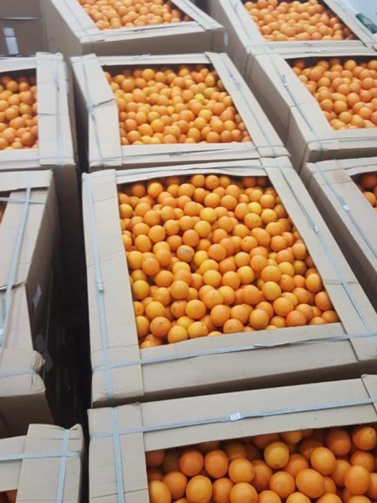Binz 600 kg ( orange )