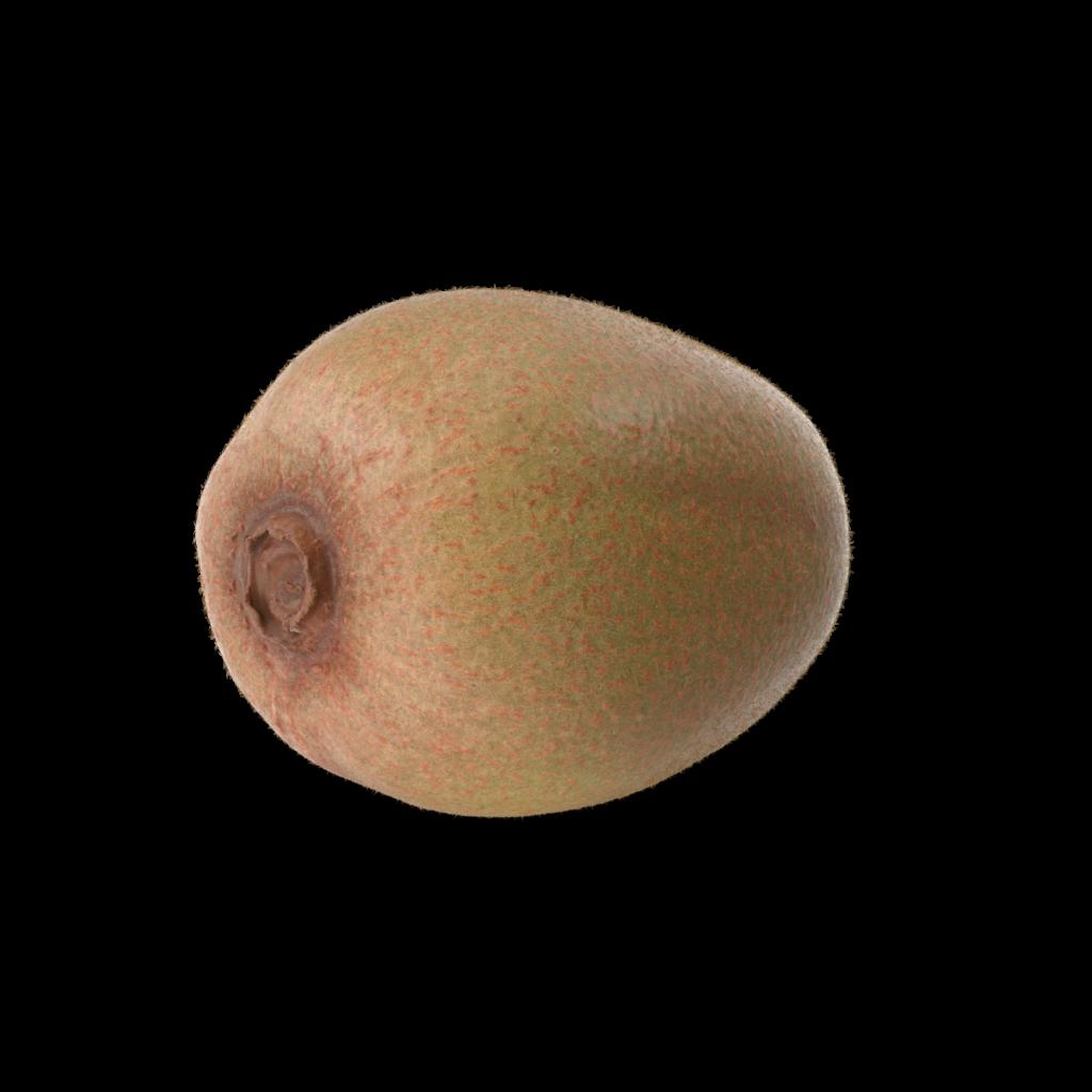 Kiwi.H03.2k