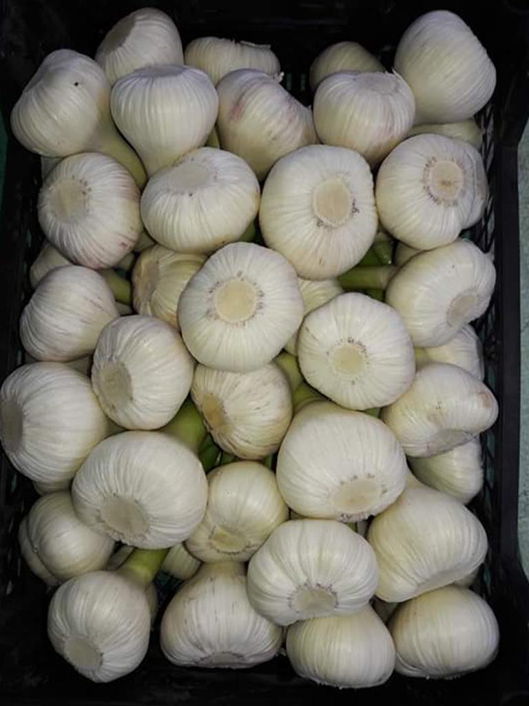 Plastic box ( fresh garlic )