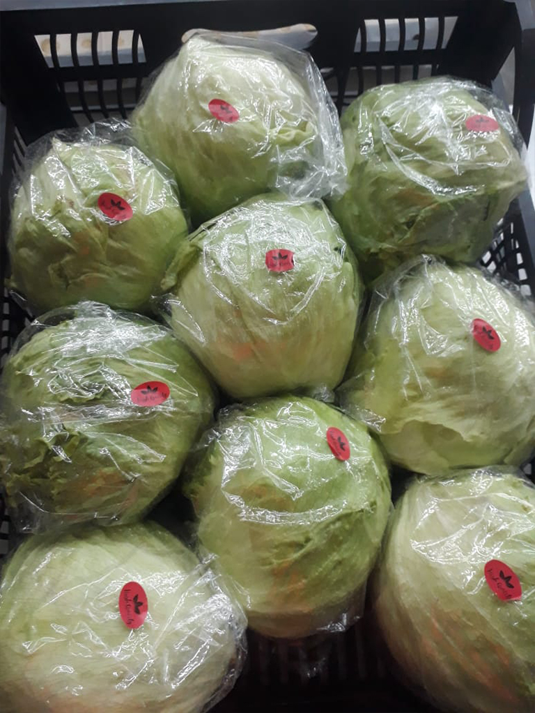 Plastic box ( iceberg lettuce )